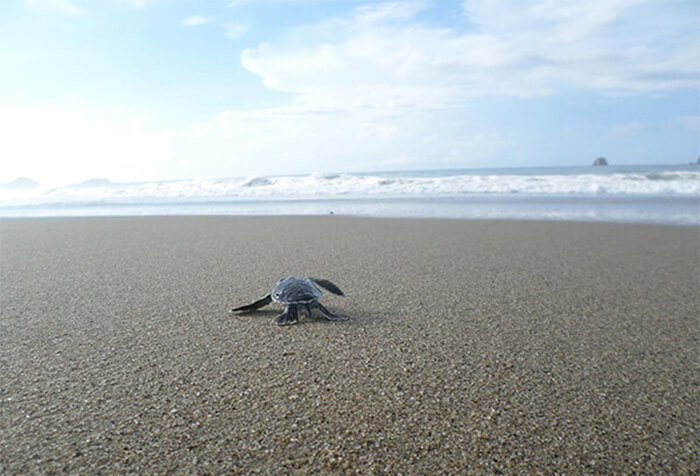 Sukamade Turtle Beach Banyuwangi East Java