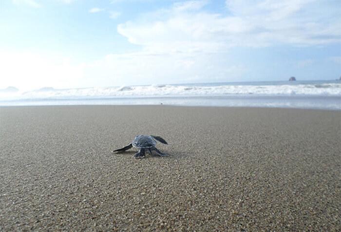 Sukamade Turtle Beach, Banyuwangi East Java