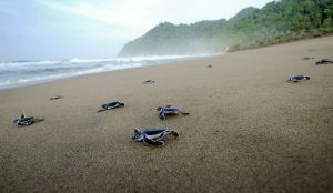 Sukamade Turtle Beach, Banyuwangi East Java