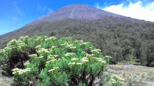 Mount Semeru Trekking, Mt Bromo tour 4 Days
