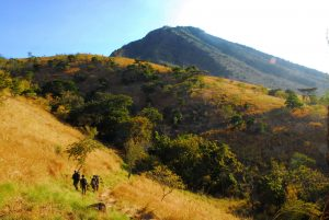 Baluran Safari Park - National Park Banyuwangi